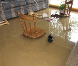 Flood Damage Annandale